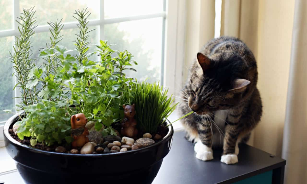 Indoor Plants Are Safe Cats
