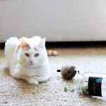 How to Dry Fresh Catnip in Two Minutes
