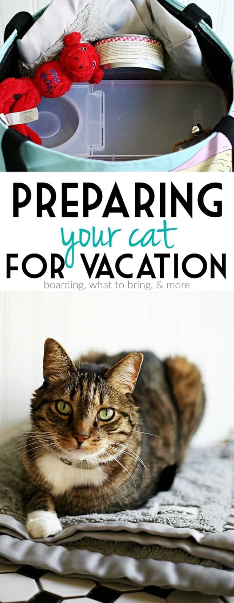 Preparing Your Cat For Vacation And Boarding Anti June