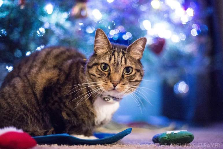 Spoil Your Cats & Tips to Keep Cats Safe Over the Christmas Holidays @kriserspets #HolidaysAtKrisers AD
