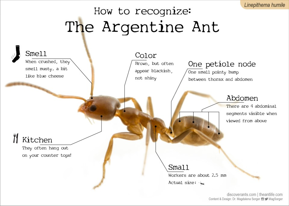 How to recognize Series - the ant life