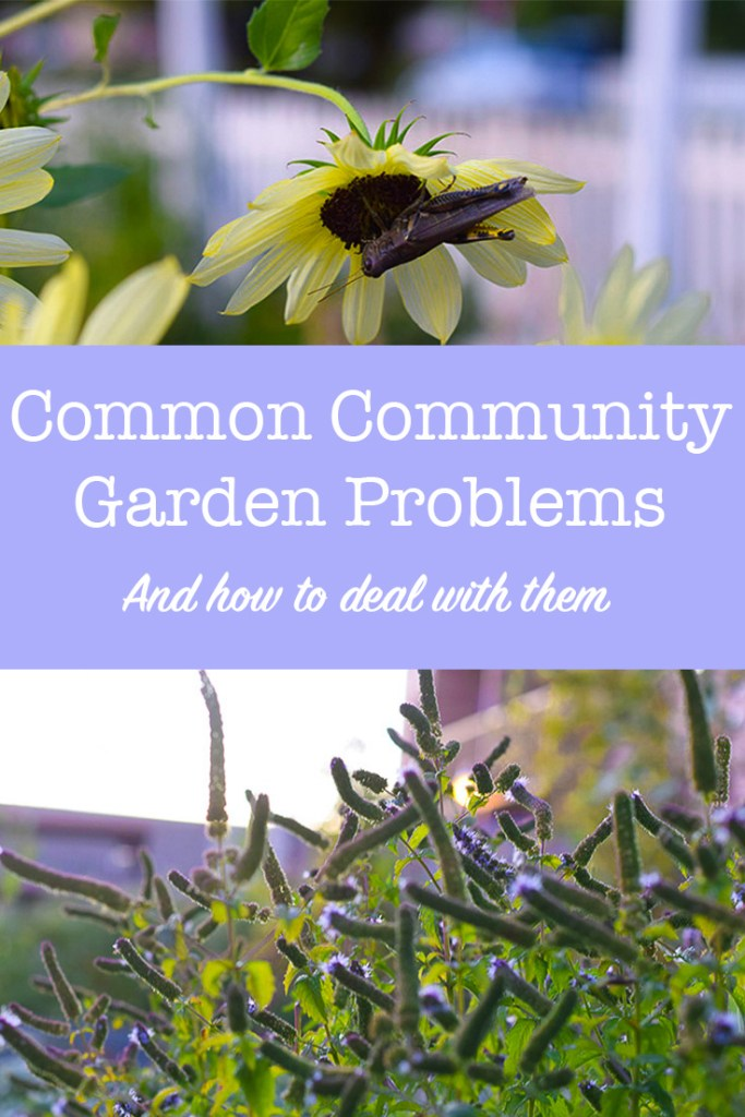 Common Community Garden Problems and How to Solve Them