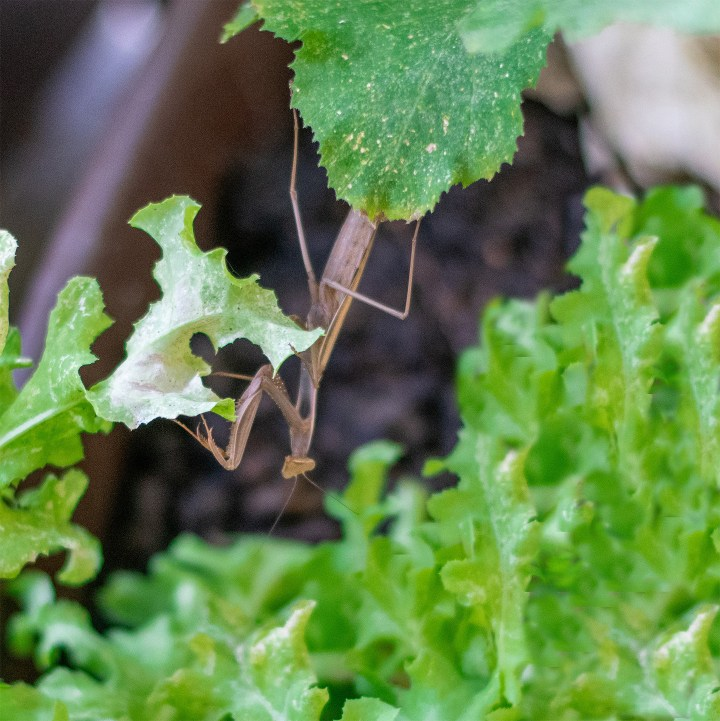 Apartment Gardening Skills: how to encourage beneficial insects in your garden