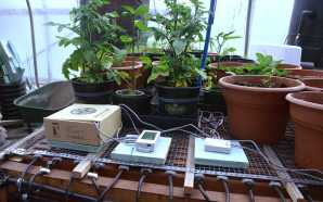 NEXUS Greenhouse studies how to grow plants year round sustainably