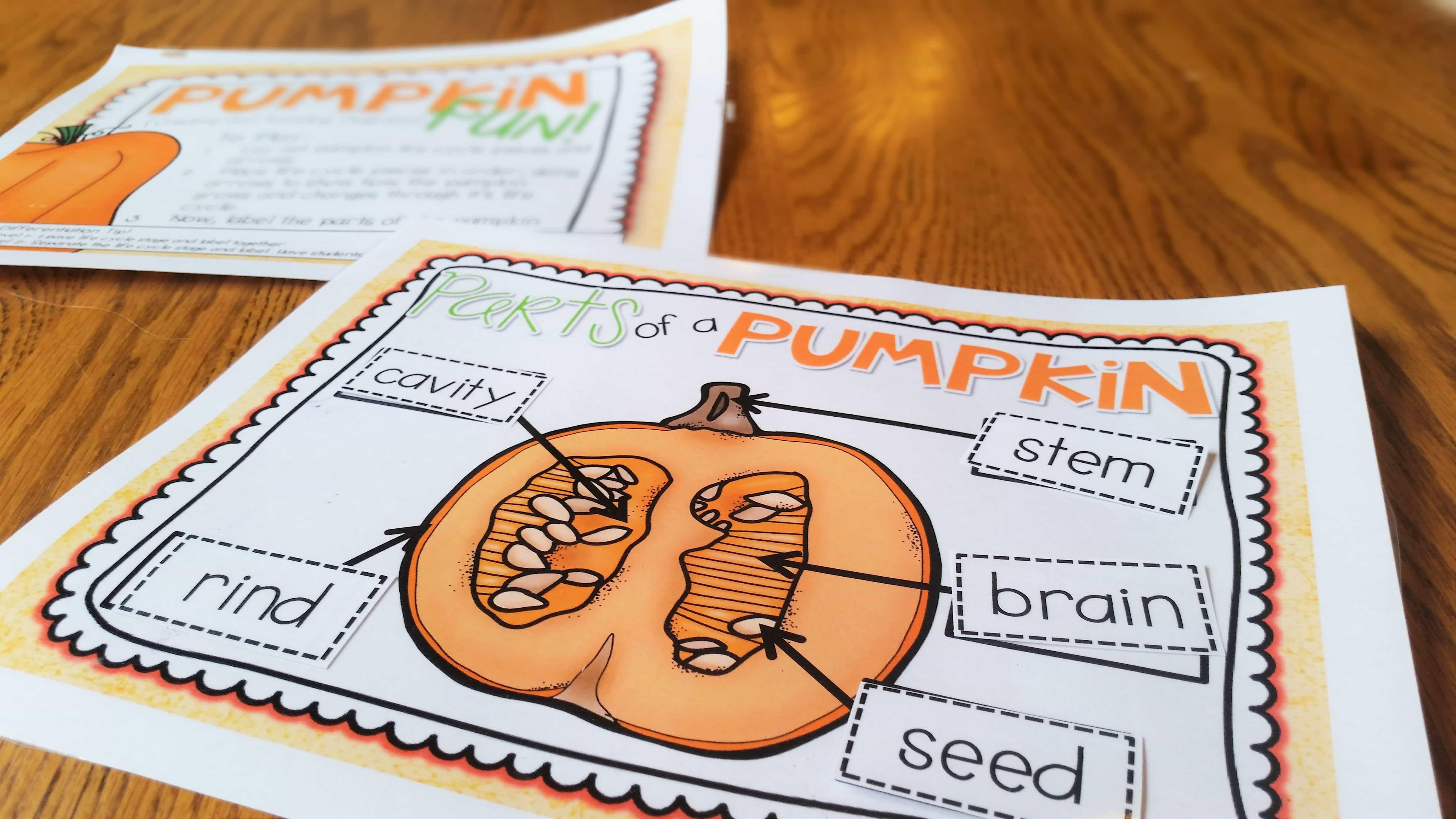 pumpkin diagram the applicious teacherparts of a pumpkin diagram center