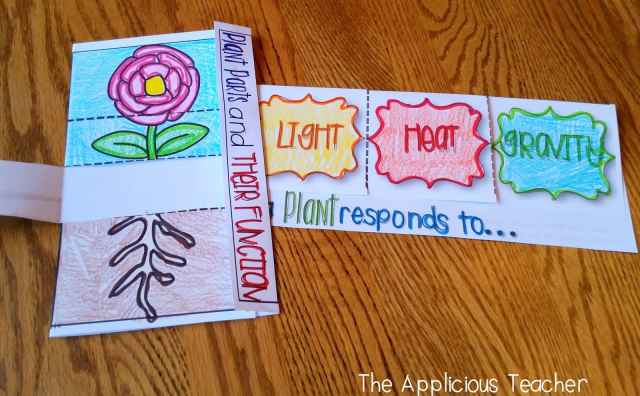 plant structures and plant responses foldables