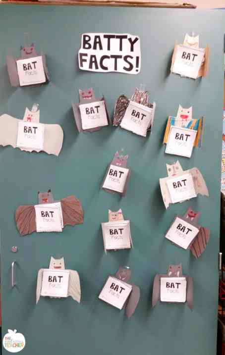 Bat Facts bulletin board