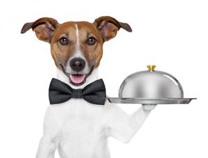 dog service tray