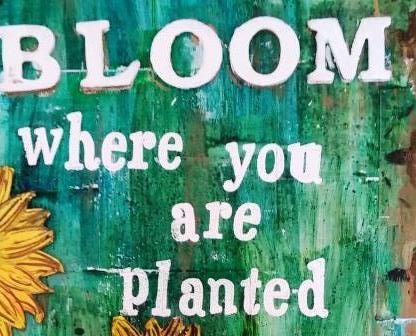 Bloom where you are planted 1