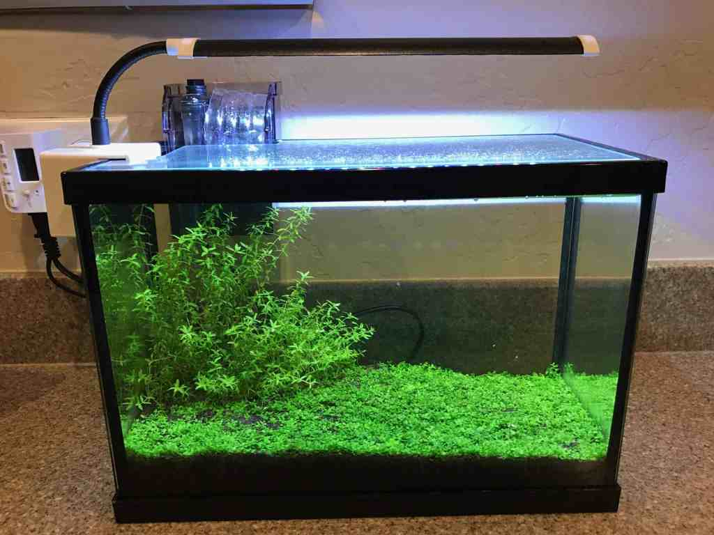 how to setup a planted aquarium without co2 theaquariumadviser