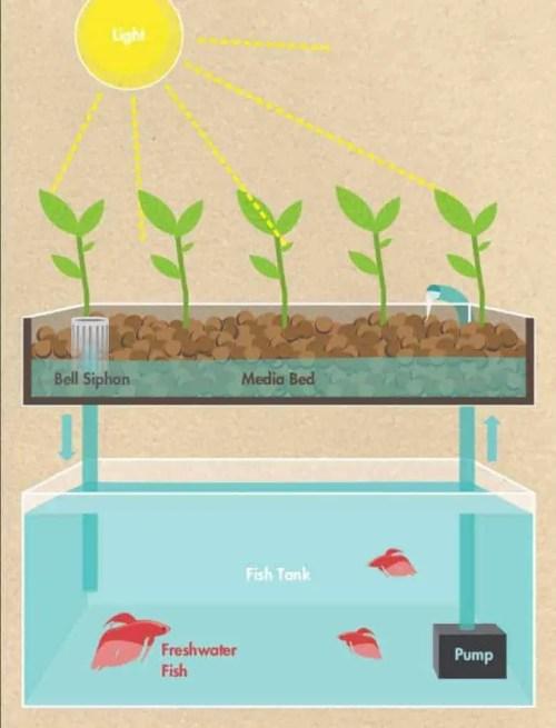 small resolution of aquaponics diagram