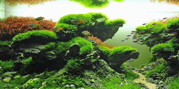 Understanding Taiwanese Aquascaping Style  The Aquarium Guide