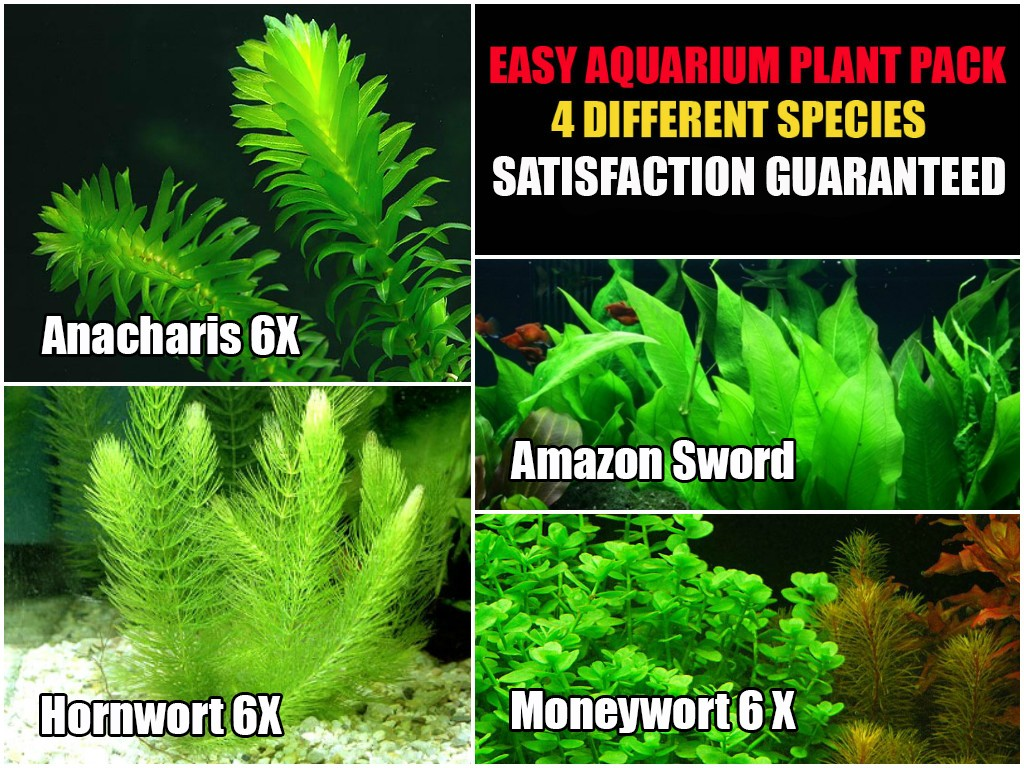 Live Aquarium Plant Combination 4 Easy Aquatic Species