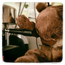 bear is brewing espresso