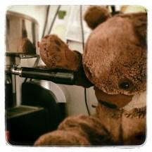 bear is brewing espresso