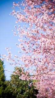pinkTrees_2_006a copy
