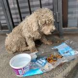 This abandoned dog was given food and water. Unlike the others, he was taken to a vet. Unfortunately, it was too late. The ravages of homelessness and street life took a toll on his body. He died.
