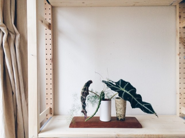 Stilllife with dying alocasia