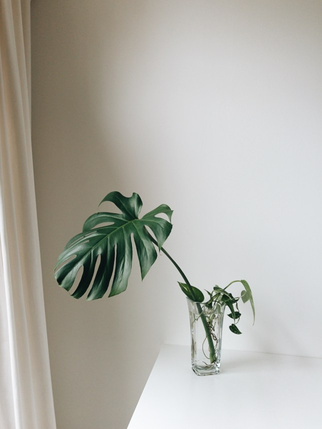 Arrangement with monstera deliciosa.