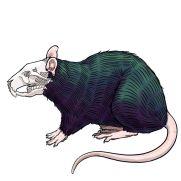 Mick Kaufer, Instructor, Skull Rat, Digital Drawing
