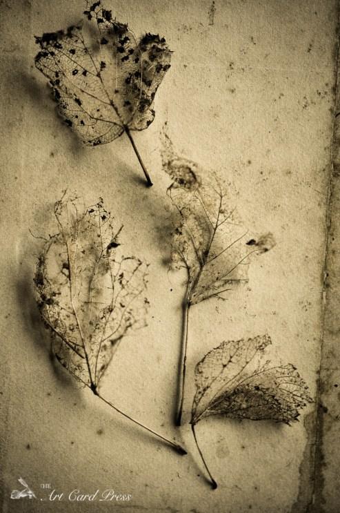 Ghost leaves 9