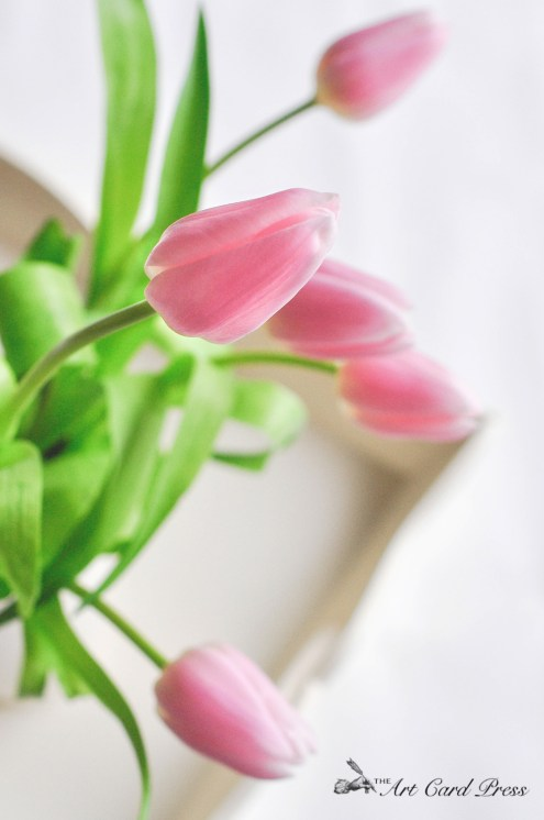 Pink Tulips 13-001