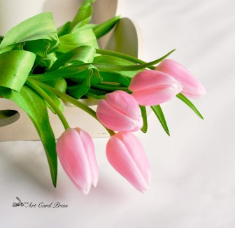 Pink Tulips 5