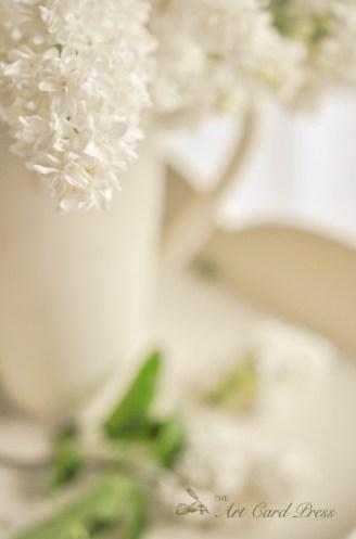 White Lilac 4