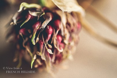 Garlic & Flowers 12-2