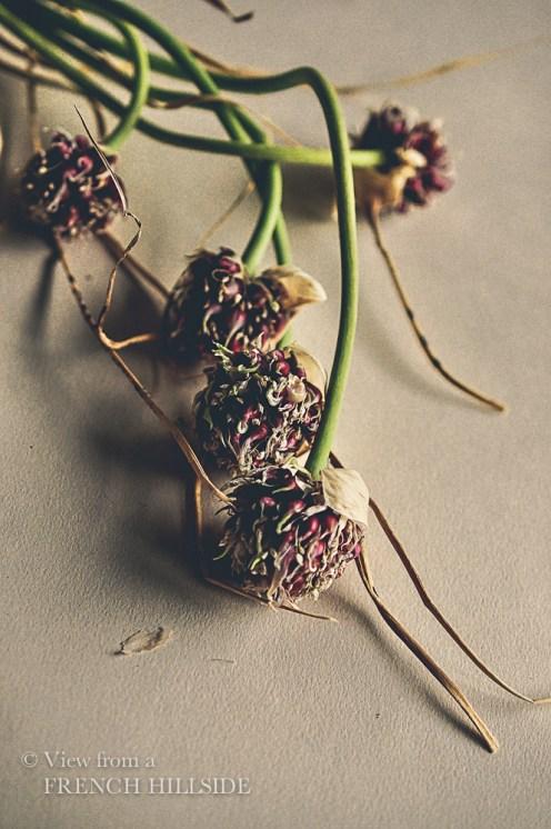 Garlic & Flowers 8
