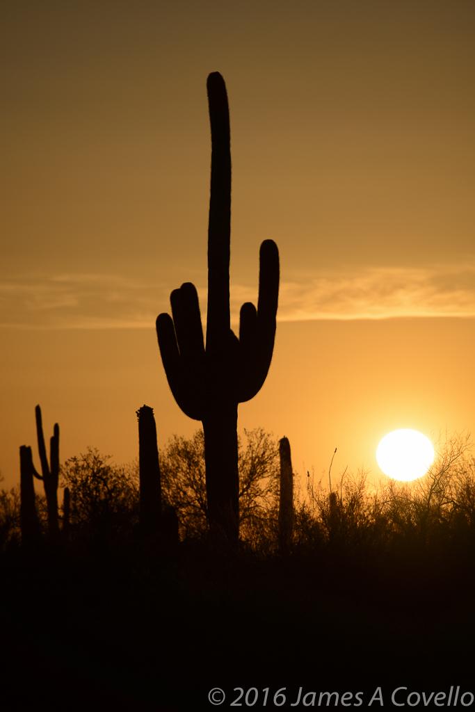Nikon 300mm f/4E PF Conquers the Desert Sun