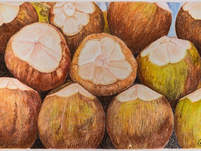Coconuts by Gail Steel
