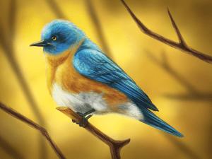 Puffy Bird by Tobias Vyseri