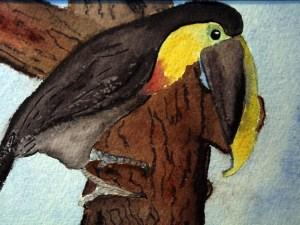 Toucan by Jocelyn Bichard