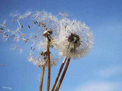Make a Wish by Kelly Cushing