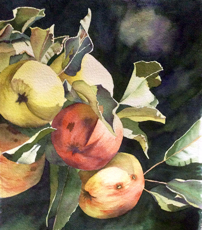 Heritage Apples by Kathy Nay