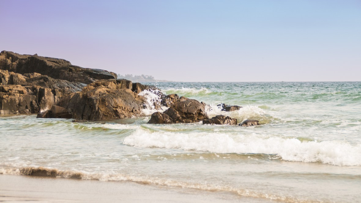 This beach of the coast of Maine  many marine birds, whales, fish and small invertebrate life!
