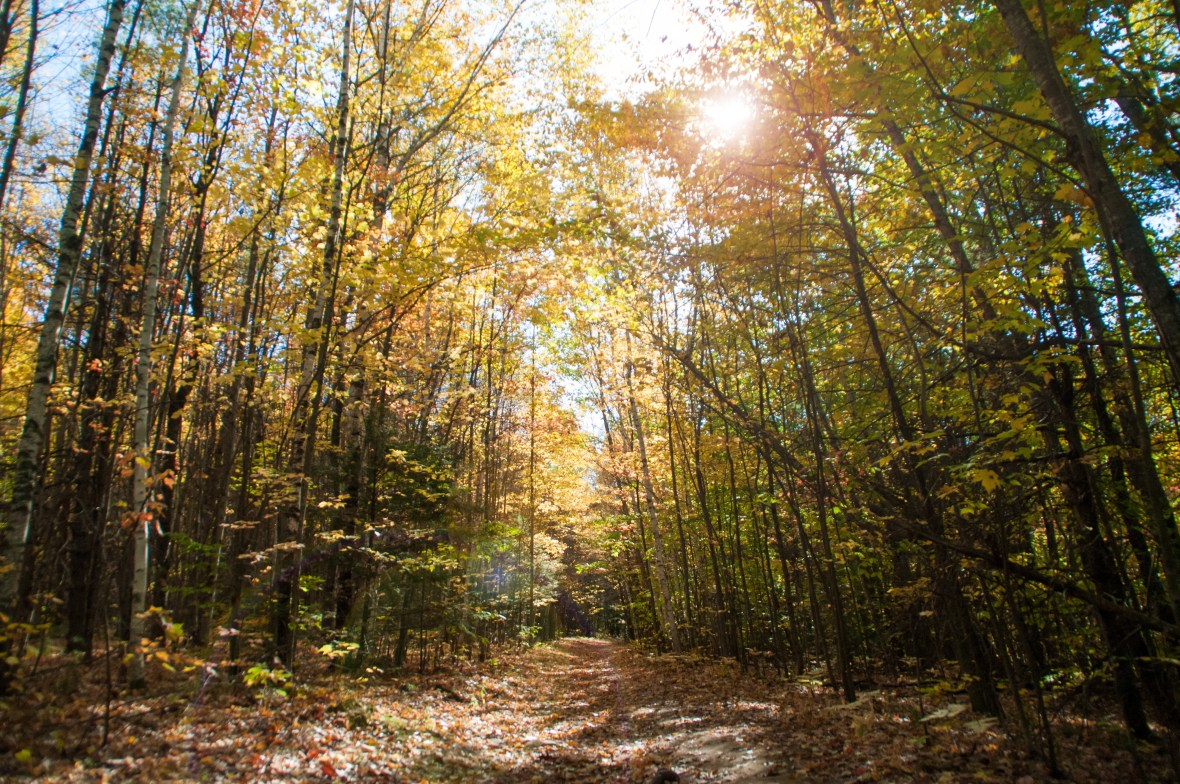 Does taking a walk down this sunny forest path on a crisp fall day sound like heaven to you? Spending time outside in nature is proven to increase happiness and well-being.
