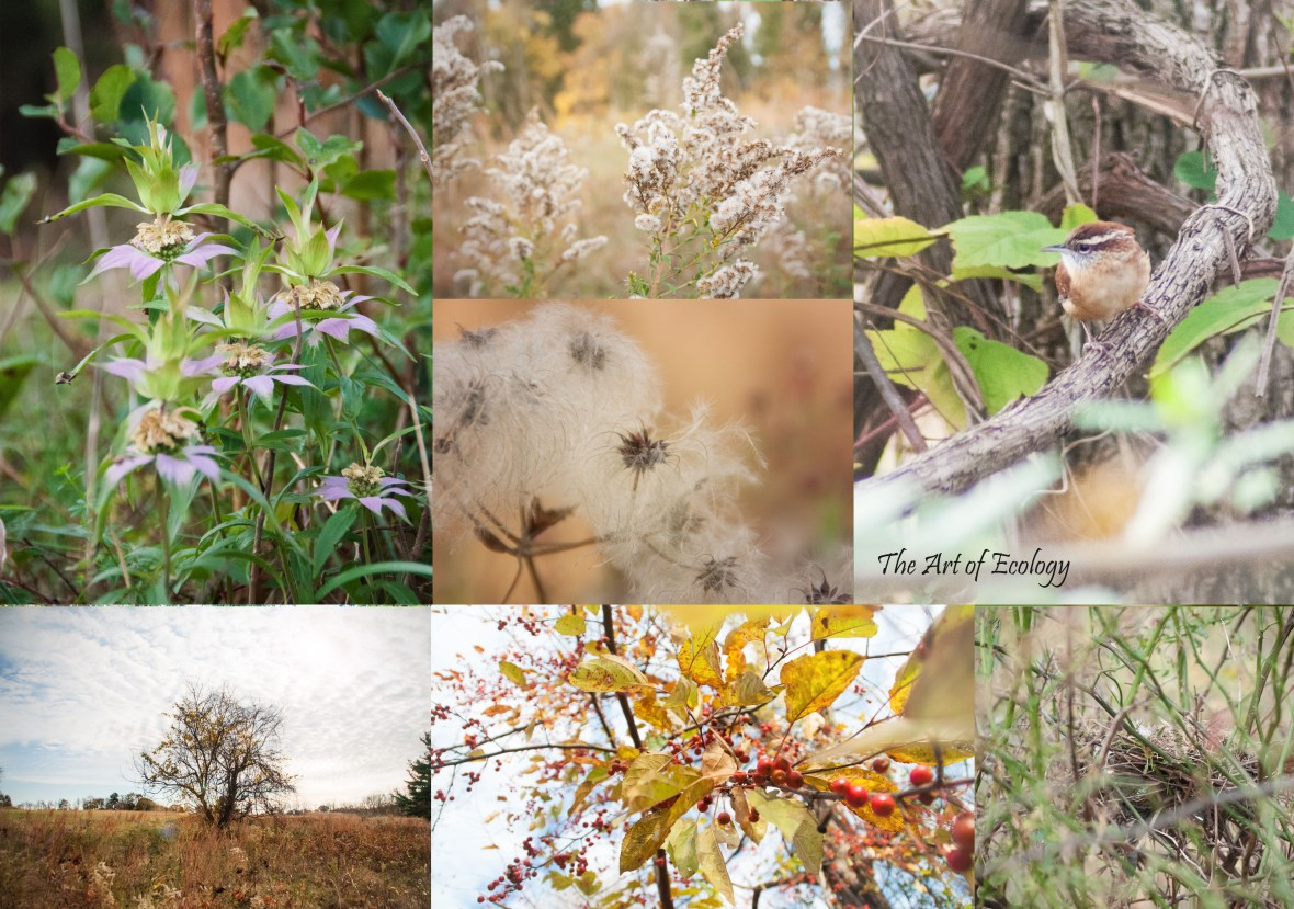Fall 2017 Selections from Tyler State Park Pollinator Habitat Restoration Photography
