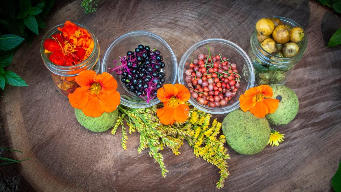 autumn foraging harvest