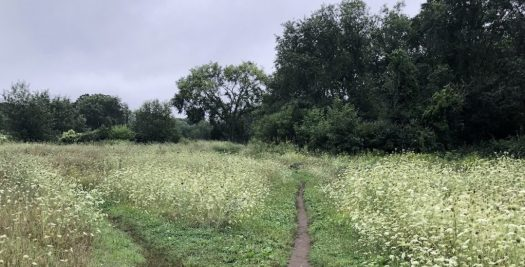 Path in an outdoor field