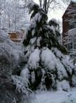 Wintertanne