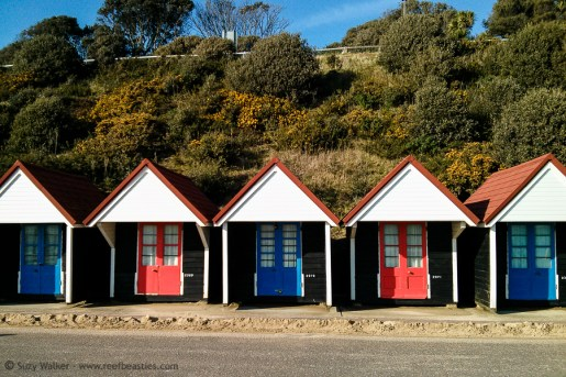 Blue And Red huts