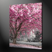 15 Collection of Pink Canvas Wall Art