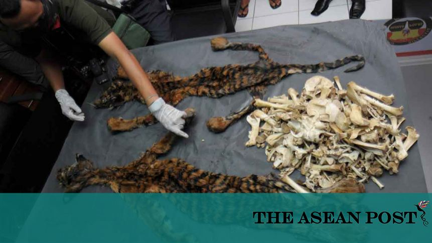 Money laundering and the illegal wildlife trade