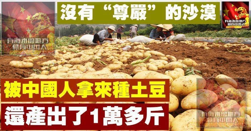 """沒有""""尊嚴""""的沙漠,被中國人拿來種土豆,還產出了1萬多斤"""