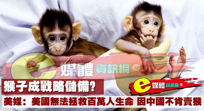 猴子成戰略儲備?美媒:美國無法拯救百萬人生命,因中國不肯賣猴