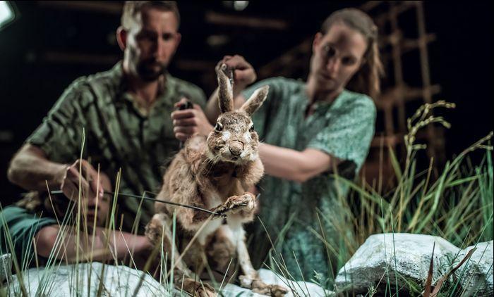 Inszenierungsbild, auf dem sich zwei Puppenspieler befinden, ein Mann und eine Frau, die von hinten eine Hasenpuppe steuern. Der Hase sitzt auf stilisierten Steinen, Gräser sind um ihn herum.