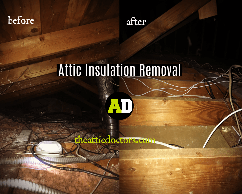 hight resolution of another total attic cleaning was done by the attic doctors