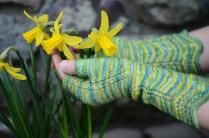 Remember the Daffodils ©Aurelie Colas 2015 Photo ©Jenny Rose Photography